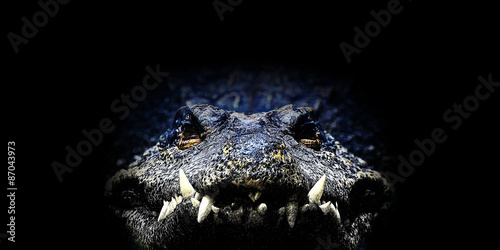 Canvas Print Crocodile, Illustration