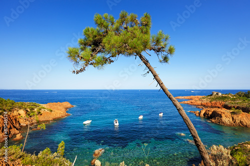Foto op Plexiglas Kust Esterel, tree, rocks beach coast and sea. Cote Azur, Provence