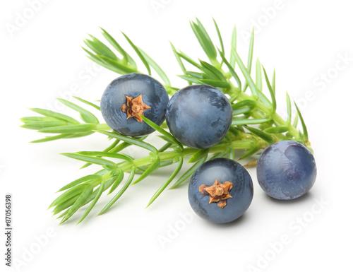 Fototapeta Juniper berries isolated  obraz