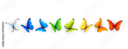 Fototapeta Set of colorful butterflies obraz