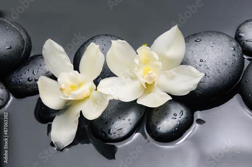 dwa-biale-kwiaty-orchidei-z-kamieniami-terapii