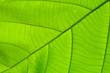 structure of leaf natural background