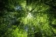 Sonnenstrahlen im Blätterdach