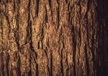 Bark, Tree, Wood.