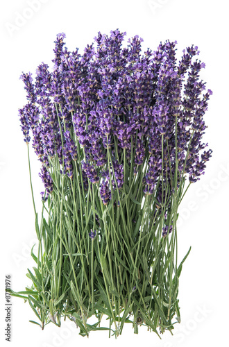 Lavender flowers over rustic metal background. Fresh blossoms - 87111976