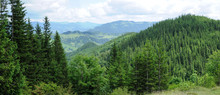 Panorama Of Beautiful Mountain Forest
