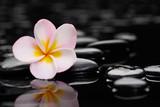 Fototapeta Bambus - Still life with zen wet stones and frangipani