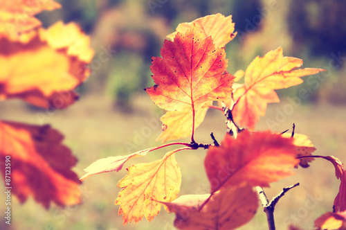 Photo  Red and yellow leaves in autumn forest