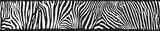 Fototapeta Zebra - Vector background with zebra skin