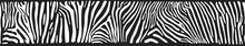 Vector Background With Zebra S...