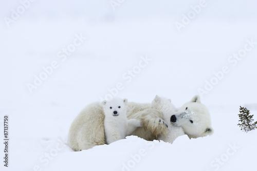 Wall Murals Polar bear Eisbaerin mit Jungen