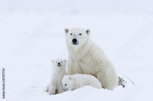Papiers peints Ours Blanc Eisbaerin mit Jungen