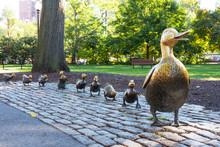 Make Way For Ducklings, Boston Public Garden