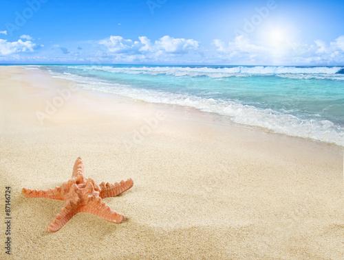 Photo Sunny beach with starfish