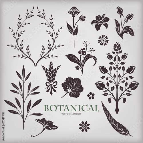 Fotografie, Obraz  Botanical vector set