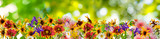 Fototapeta Kwiaty - flowers in the garden