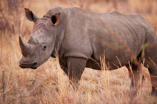 Fényképezés  White Rhino