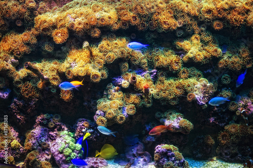 Staande foto Aquarium with coral and colorful tropical fish