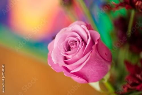 Fototapeta Rosa Rose obraz na płótnie