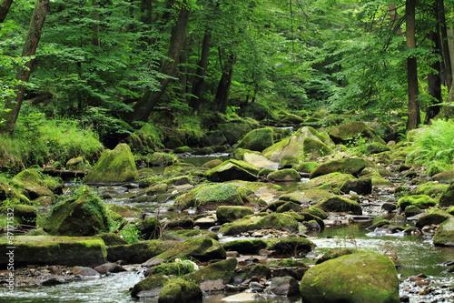 Poster Rivière de la forêt river in the forest