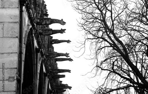 Photo sur Toile Oiseaux sur arbre Exterior detail of Notre dame de Paris