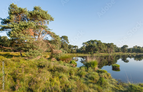 Fotografie, Obraz  Scots pine at the banks of a natural pond