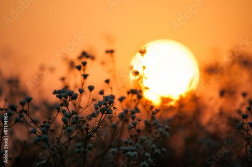 Poster Oranje eclat Early morning in the field. Hot summer sunrise in countruside