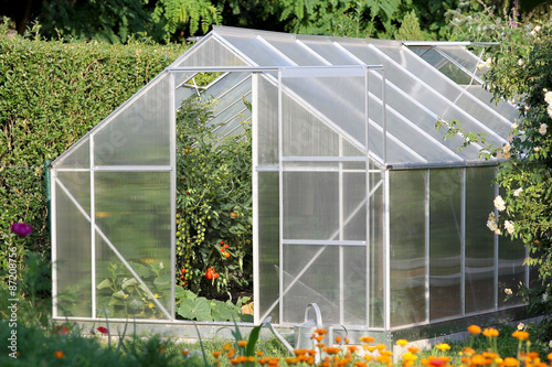 Fotografia Greenhouse with tomato plants