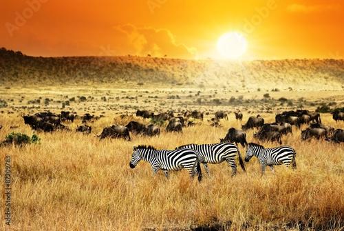 In de dag Zebra African sunset