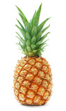 Fototapeta Łazienka - ripe pineapple isolated on white background