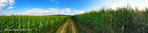 Foto Weg durch die Maisfelder