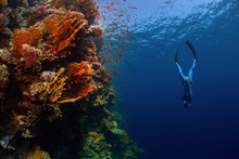 Freediver In The Sea