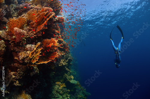 Fotografia Freediver in the sea