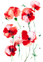 Fototapetapoppies