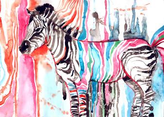 Fototapeta na wymiar zebra