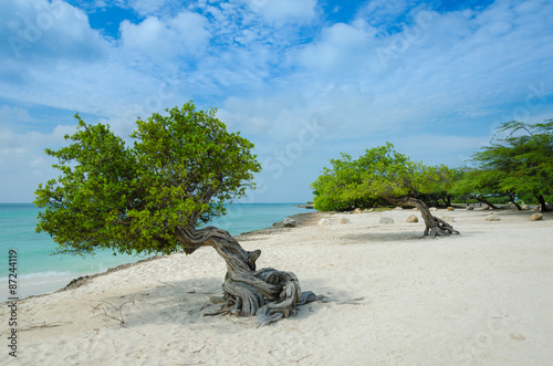 Divi Divi trees on  Eagle Beach in Aruba Poster