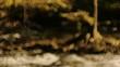 秋の渓流 3