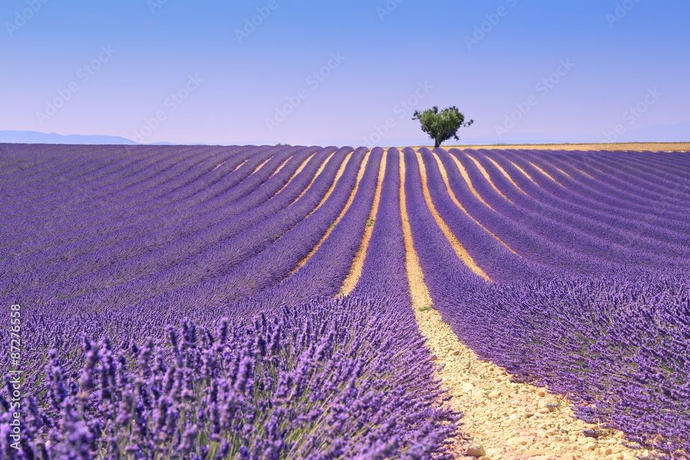 Plateau Valensole, Provence: lavender field