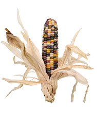 Indian Corn With Husks – Col...