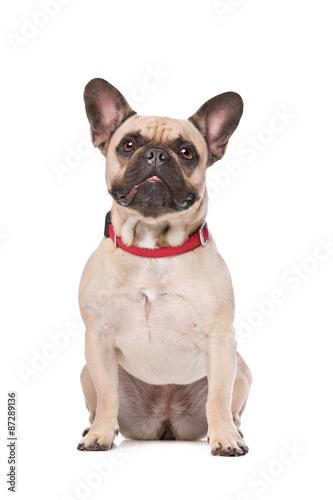 Deurstickers Franse bulldog Brown French Bulldog