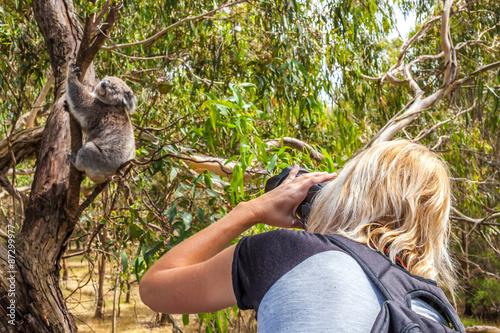 Fotobehang Koala Wildlife Photographer