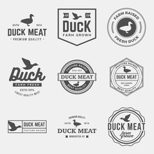 Vector Set Of Premium Duck Mea...