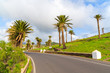 Road lined with palm trees to Haria mountain village, Lanzarote, Canary Islands, Spain