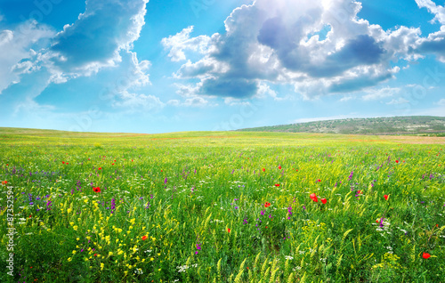 Obraz Spring meadow of flowers - fototapety do salonu