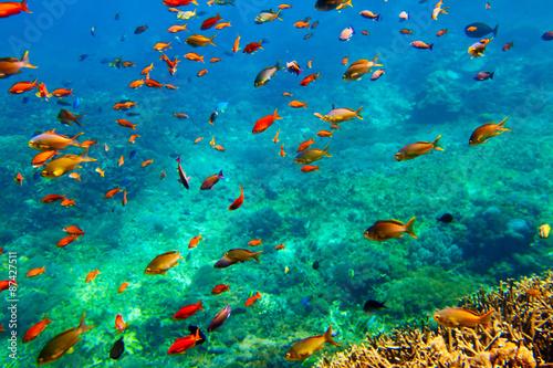 fototapeta na drzwi i meble Underwater landscape