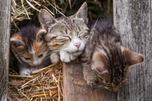 Little Kitten In The Barn