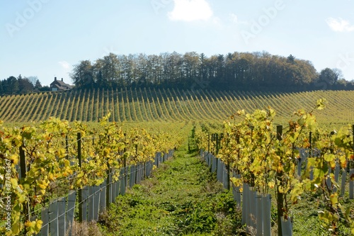 Papiers peints Vignoble English vineyard in Autumn