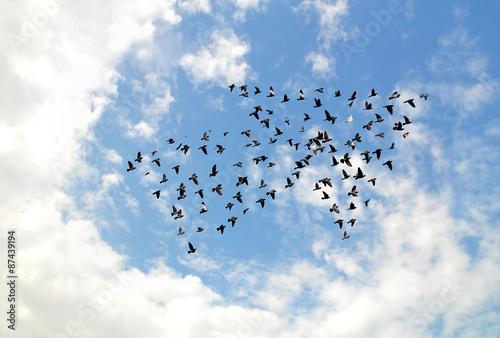 Fotografie, Obraz  Ptáci na obloze, růst a rozvíjet koncept