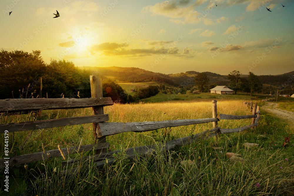 Fototapeta art rural landscape. field and grass