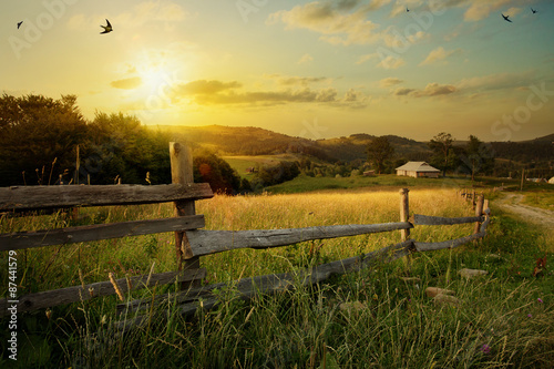 art rural landscape. field and grass Wallpaper Mural